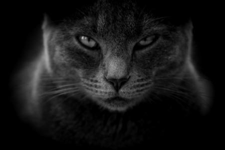 cat-3386220_1920